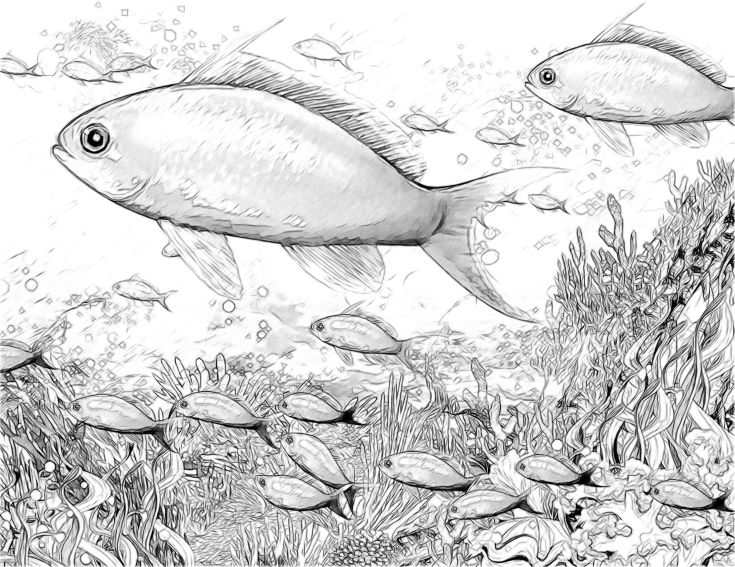 Coral reef - illustration for the children