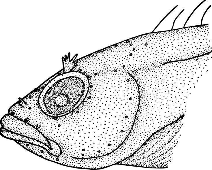 This Pointillism Fish With Exaggerated Features