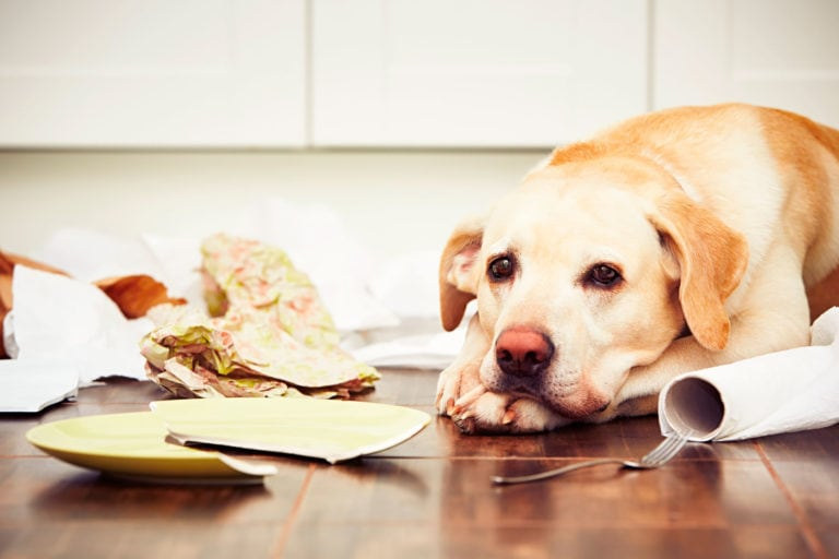 6 Dog Proof Kitchen Trash Cans that Actually Work