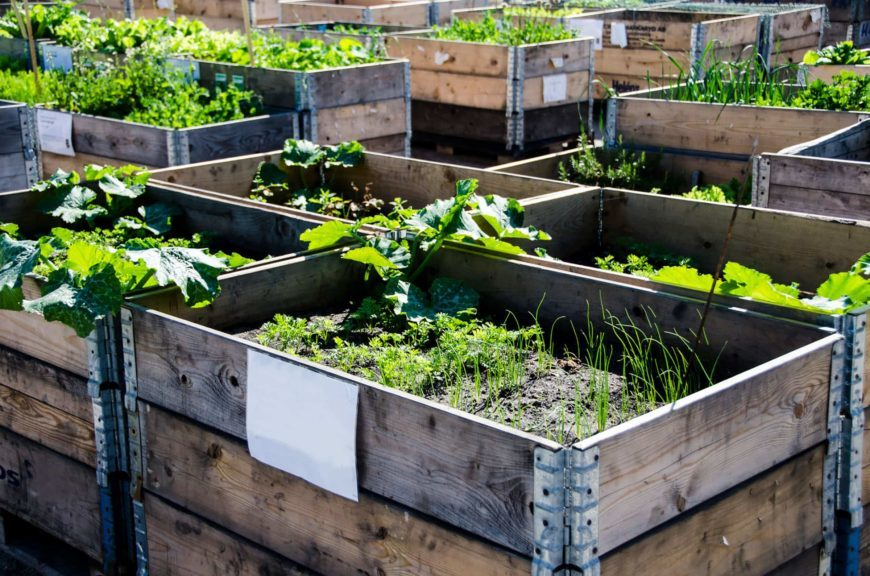 Plants in wooden beds