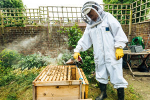 The 5 Best Bee Hive Smokers for Beginners