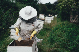 Cover Image: The Best Beekeeping Suits & Veils