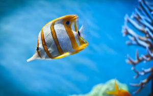 The 5 Best Aquarium Thermometers