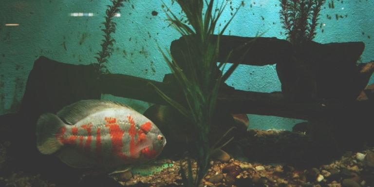 What is the Best Light for Aquarium Plants?