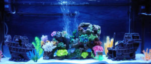 The 5 Best LED Aquarium Lighting