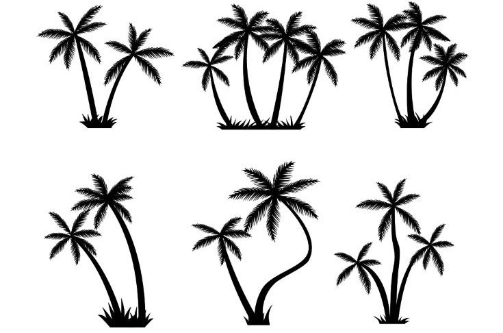 Set of palm tree silhouette that you can use for any project