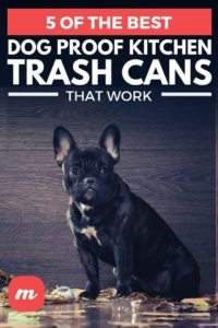 5 Of The Best Dog Proof Kitchen Trash Cans That Work