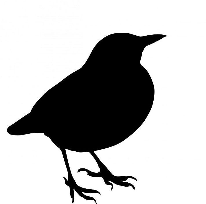Black silhouette of a blackbird on white background