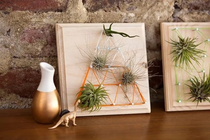 String arts use for air plants.