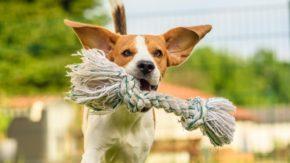 DIY Doggy Safe Toys