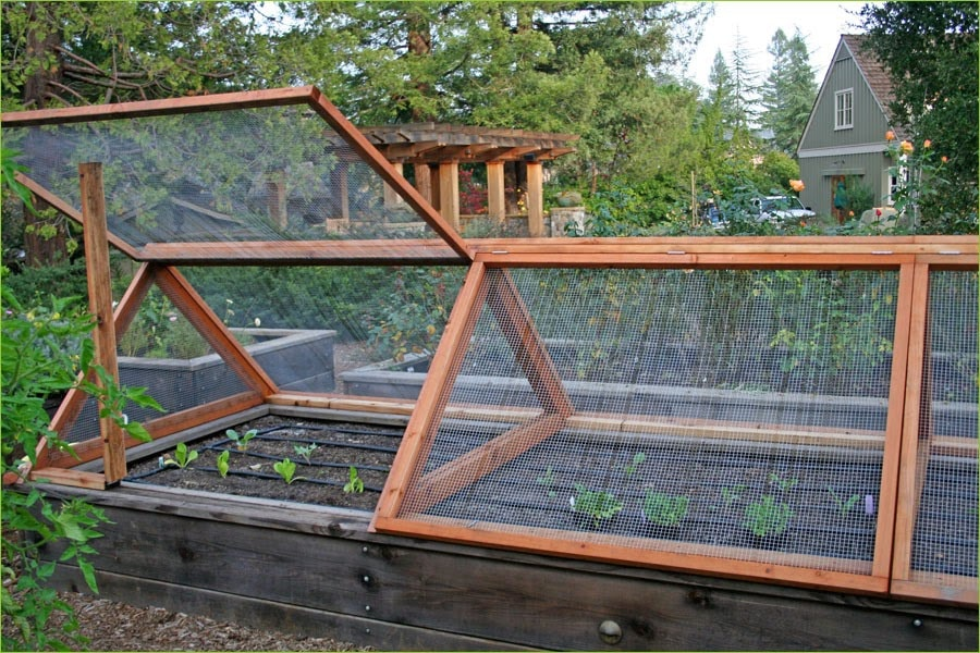 DIY Garden Bed With Irrigation Covered with Screen