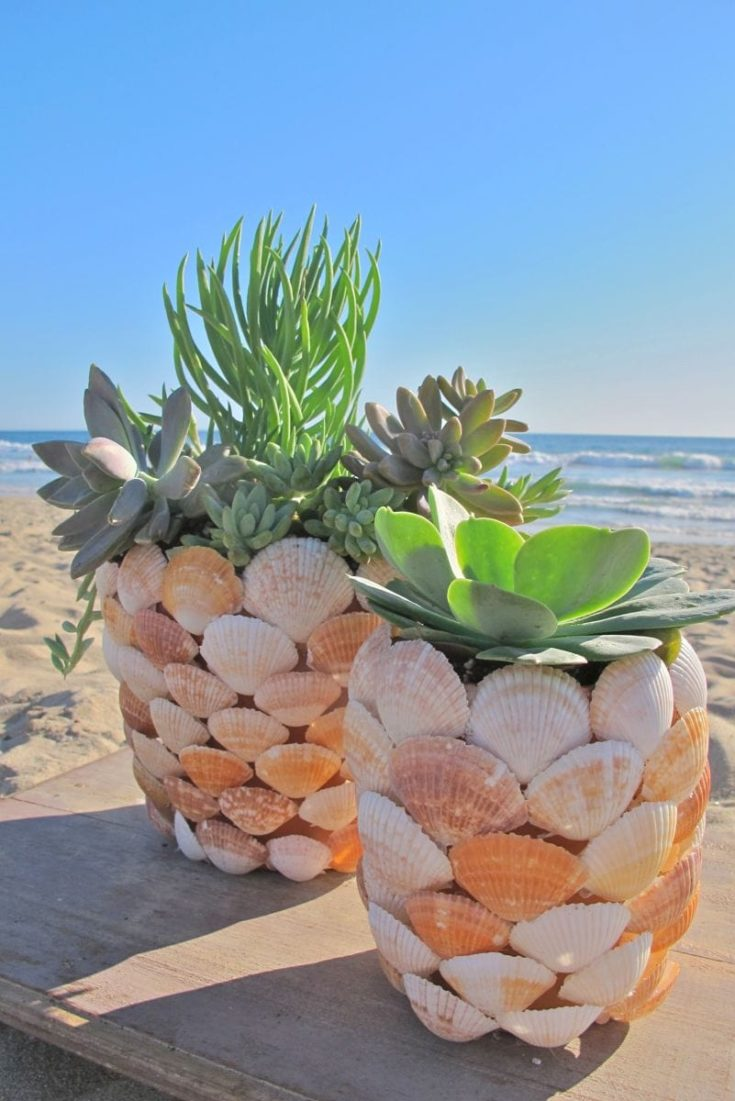 DIY Seashell Planter with beach on the background