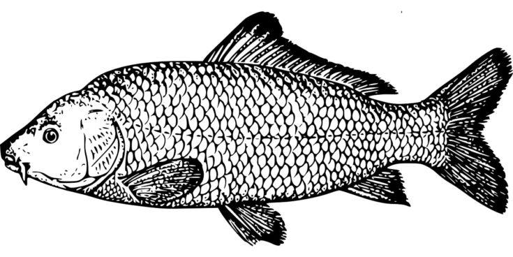 A petit carp fish design black pattern in a white background.
