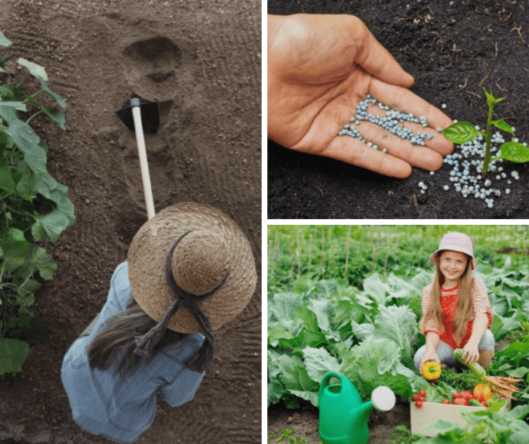 How Do You Prepare The Ground For Your Vegetable Garden?