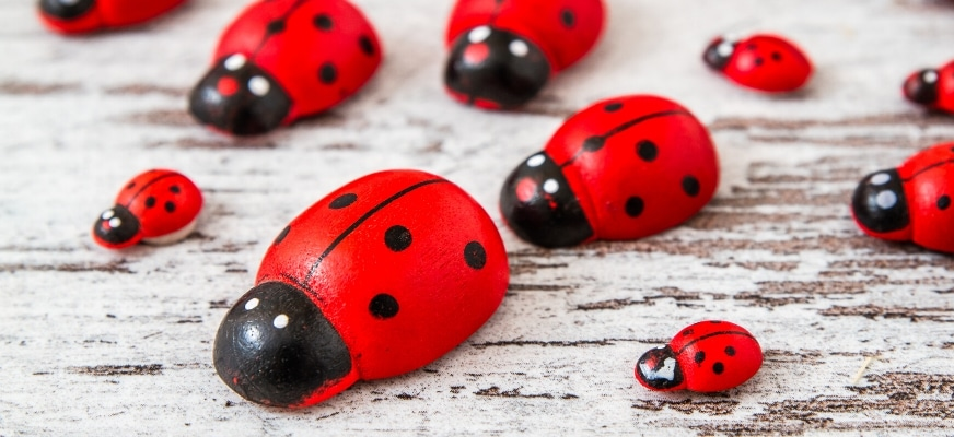 Red Lady Bug Painted Rocks on the table