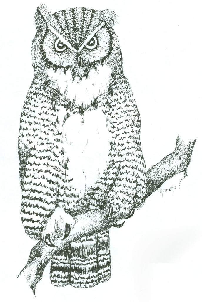Realistic Owl Pattern