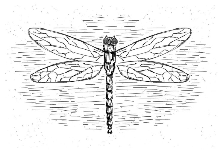Free vector of dragonfly illustration in a white bckground.