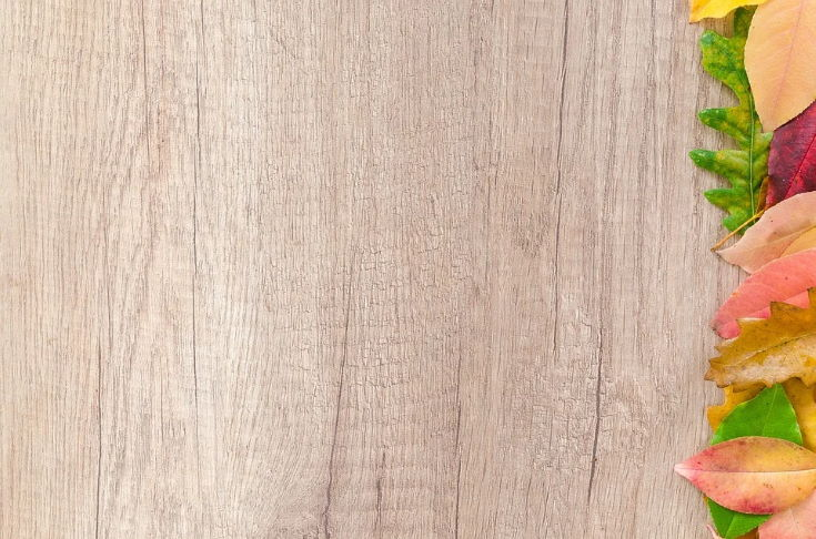 White Oak wood with colorful leaves on the right side