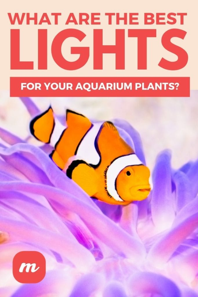 What Are The Best Lights For Your Aquarium Plants_
