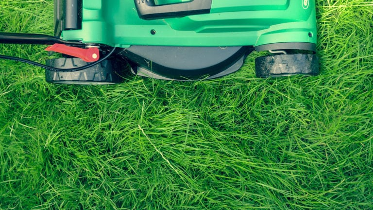 The Best Lawn Mowers for Beautifully Cut St. Augustine Grass
