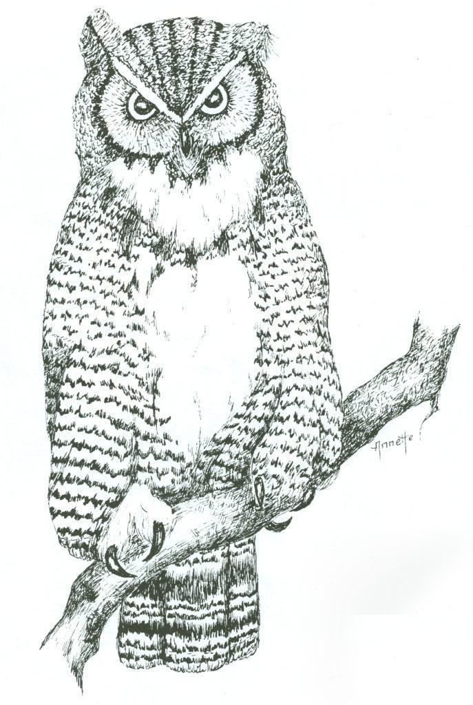 owl pattern wood burning
